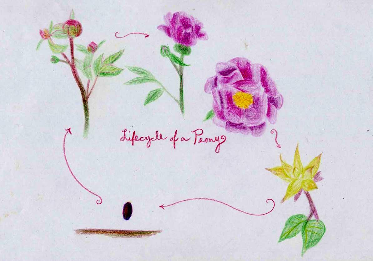 Teaching Science Through Diagrams  Botany